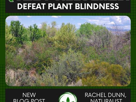 Quest Unlocked: Defeat Plant Blindness