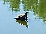 Turtle at Lake Park