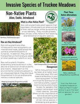 Non-native Plants.jpg