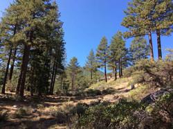 3 Galena Creek Regional Park Site 1 SEPT 2017 (Low Res)