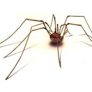 Lies We Believe as Children, Part I: The Daddy Longlegs Dilemma