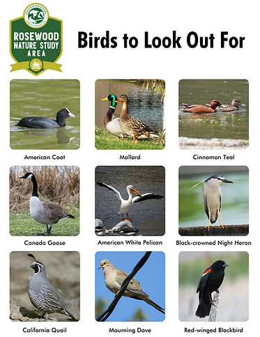 Rosewood Bird Handout.png