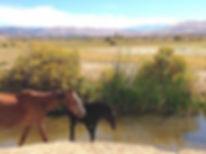 Steamboat_Springs_Nevada 2016.jpg