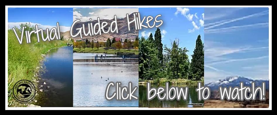 Virtual Hikes Banner (2).png