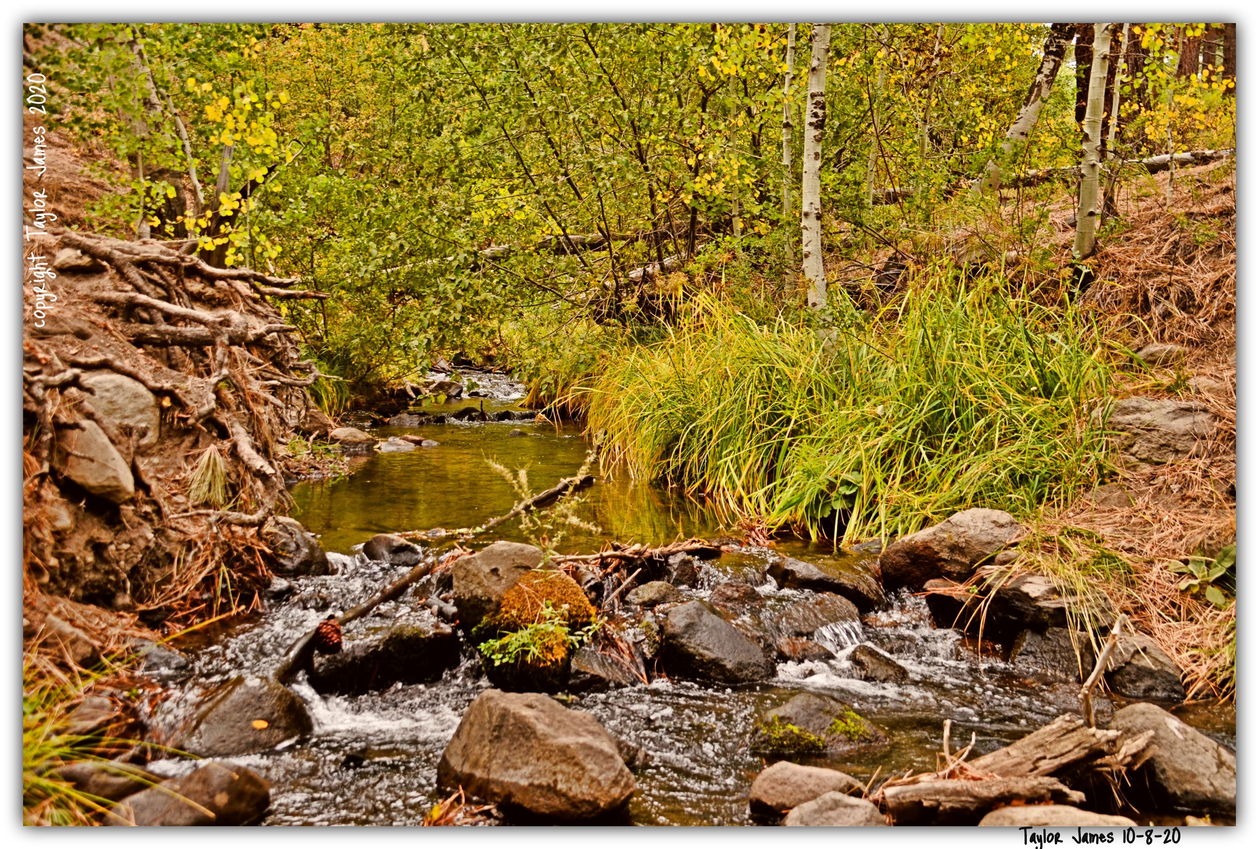 Taylor James- Thomas Creek