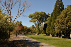 3 Cottonwood Park Site 2 Fall 2015 (low)