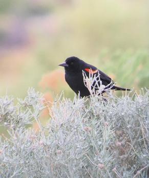 Why Birds Need Wetlands