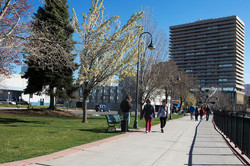 3 Bicentennial Park Site 5 March 2016 (low)