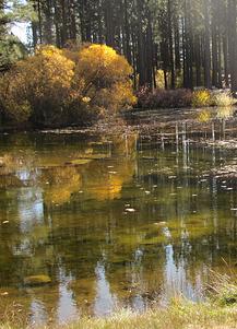 Davis Creek Park Pond