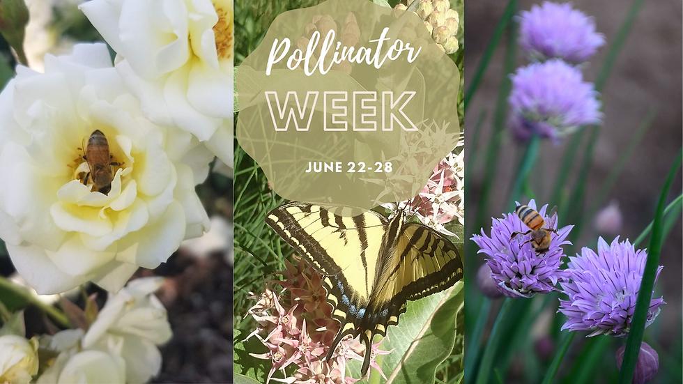 Pollinator week.png