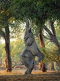 elephant tree.jpg