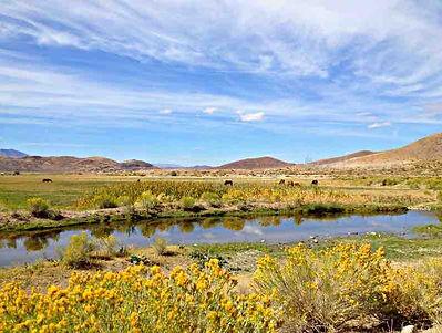 Steamboat_Creek_Reno.jpg