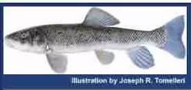 Washoe County Fish Rearing Station