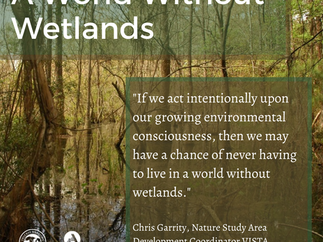 A World Without Wetlands