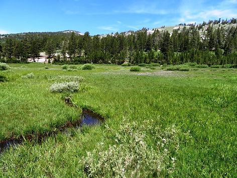Tahoe Meadows Intrepretive Loop 078.JPG