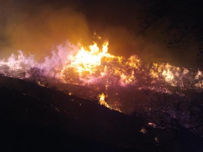 Caughlin Fire