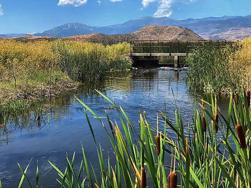 rosewood bridge and water (1).jpg