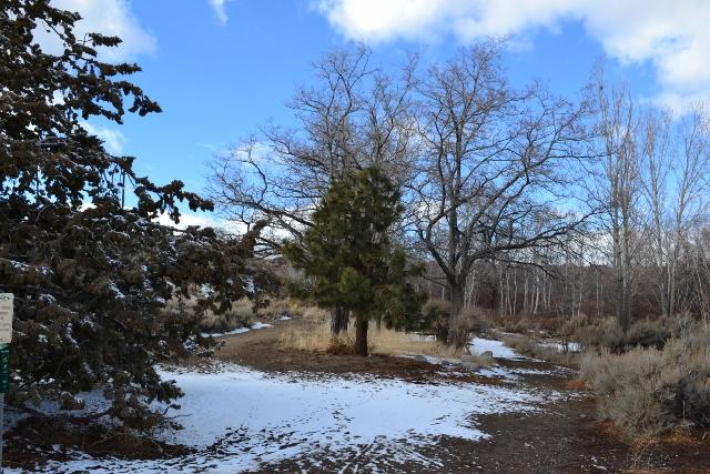 2 Whites Creek Site 1 Winter 13-14 (low)