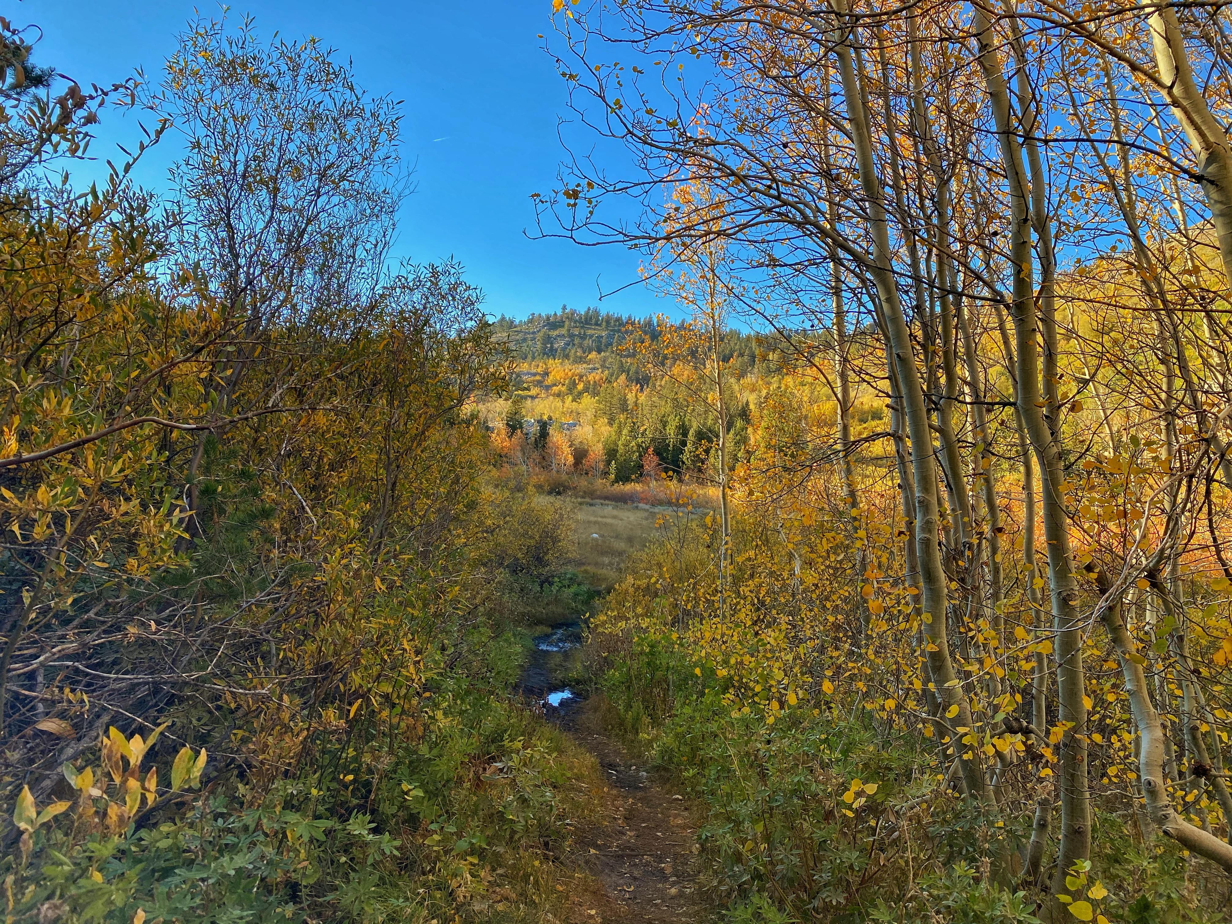 Alayna Wood- Ophir Creek Trail