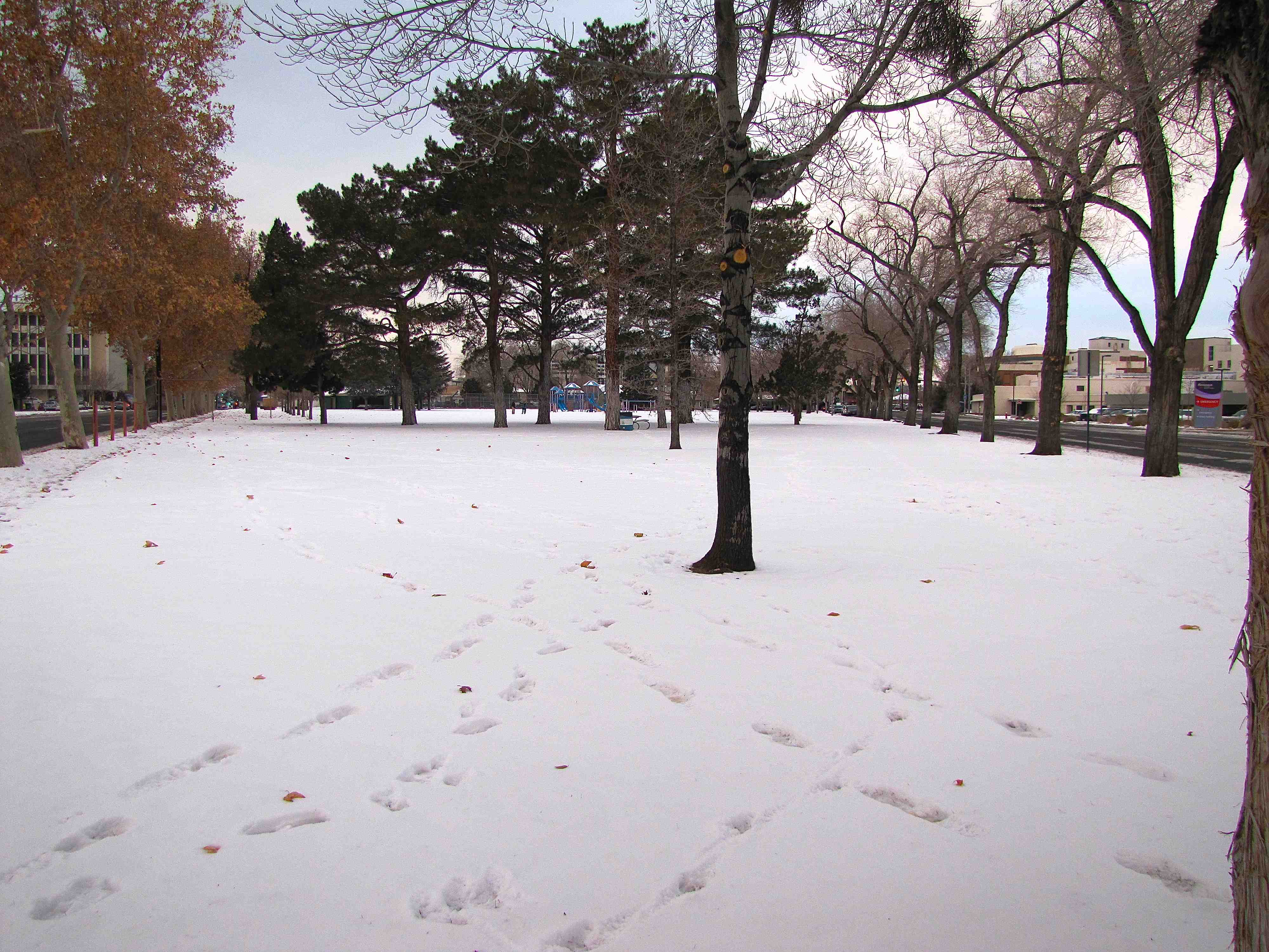 2 Pickett Park Site 2 Winter 2013 (low)