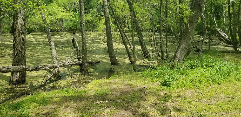 Amico Island Park, Riverside, NJ
