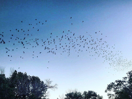 Going Batty: Nevada's Flying Friends