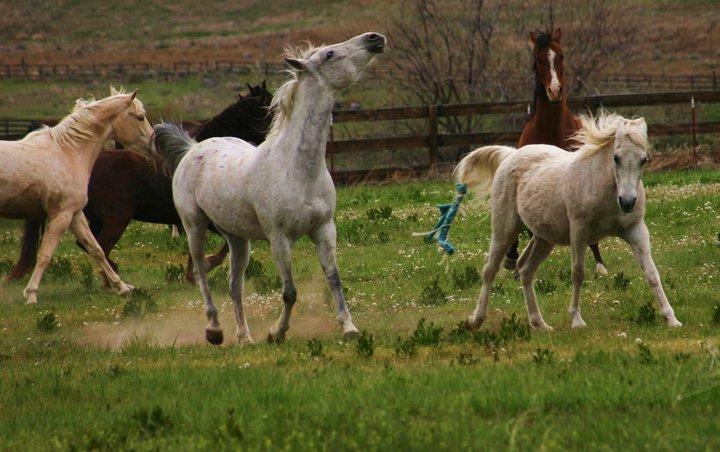 Horses in Washoe Valley