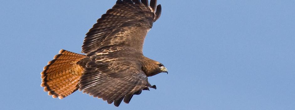 biodiversity-landing2.jpg
