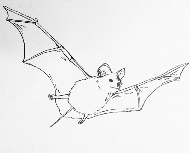 My artistic rendering of a Brazilian free-tailed bat.