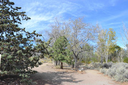 4 White Creek Site 1 Fall 2014 (low)