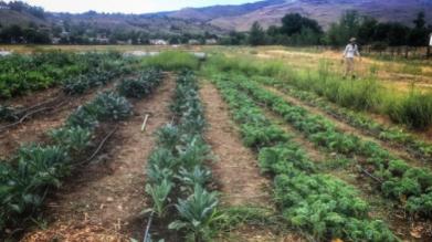Reno Food Systems