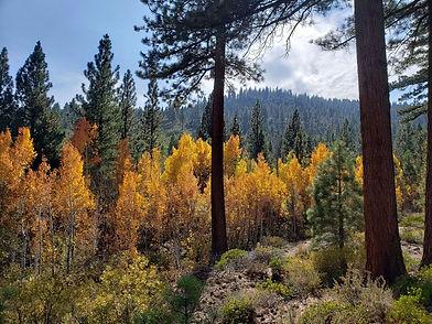 browns creek.jpg
