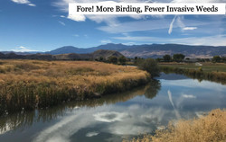 Fore! More birding, fewer Invasive Weeds