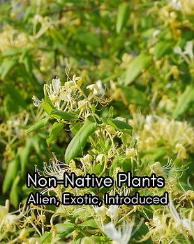 Non-native Plants