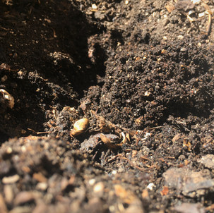 Down to Earth Gives Us the Dirt on Composting