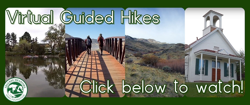 Virtual Guided Hikes updated header.png