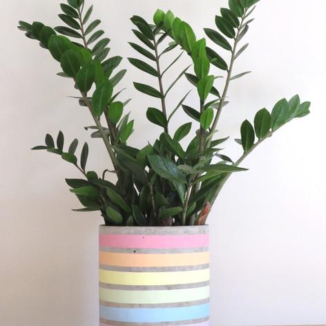 Rainbow Pot Large