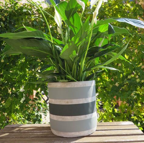 Stripe Pot Large