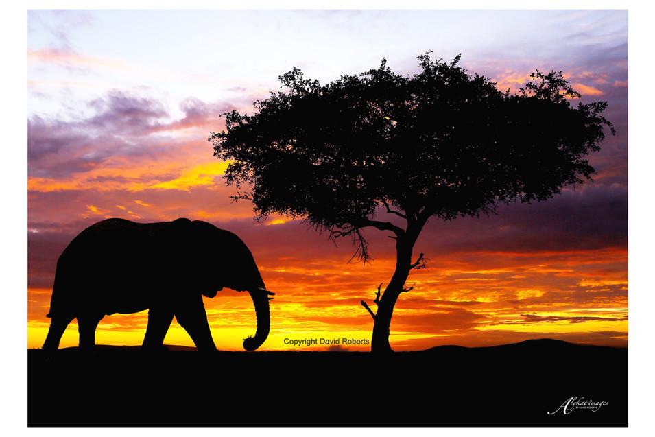 Elephant sunrise.jpg