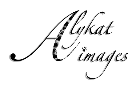 Alykat images BW png.png