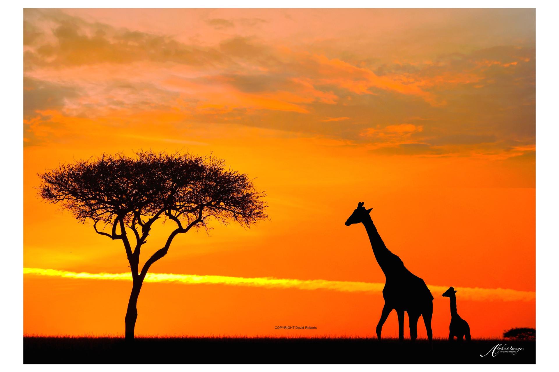 giraffe and baby sunrise.jpeg