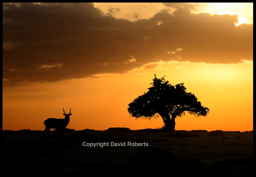 Waterbuck Sunset