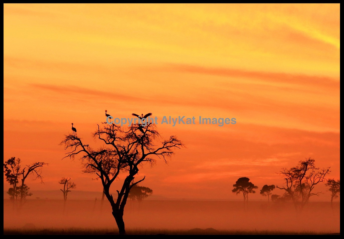 Sunrise cranes.jpg