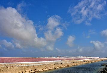 Bonaire Salt Flats.jpg
