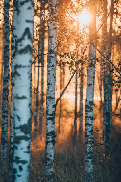 Varmt höst ljus / Warm autumn light