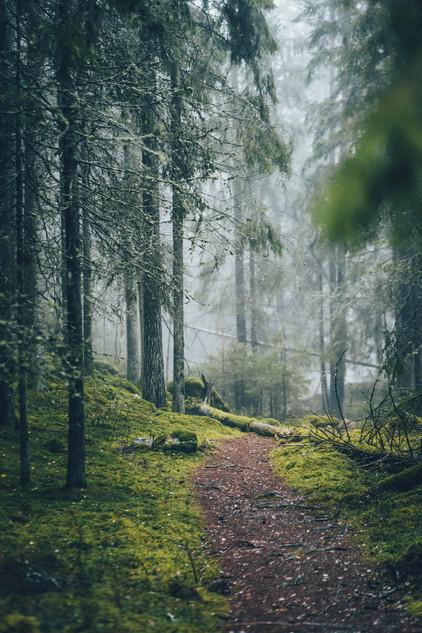 Troll skog / Moody forest