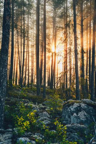 Sommar skog
