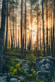Tidig morgon / Early morning