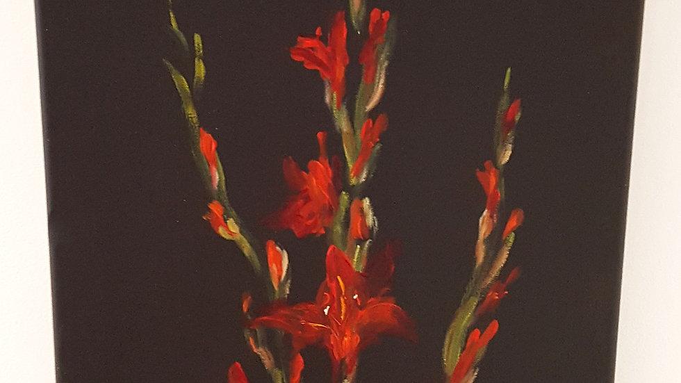 Red Gladioli- Canvas Print