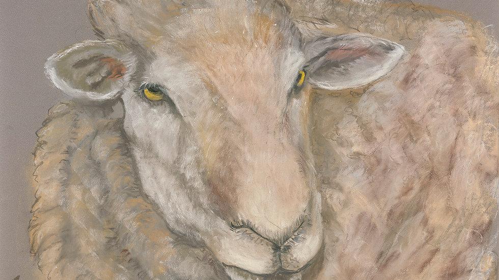 Texel Ewe- Painting